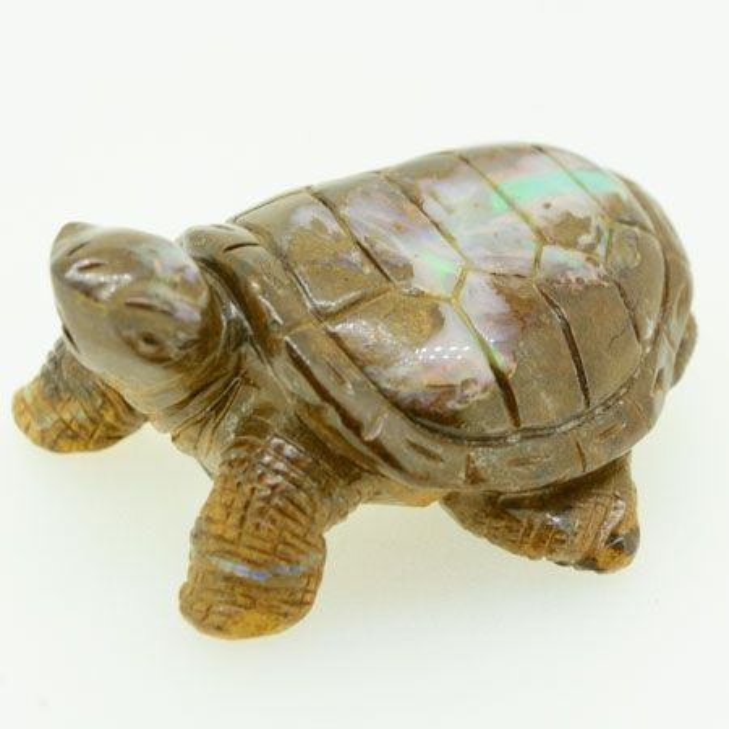 turtle 3678